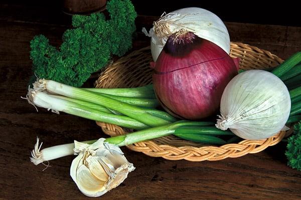 Onions 600 400