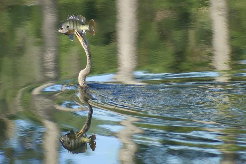 Penetrating-Reflection