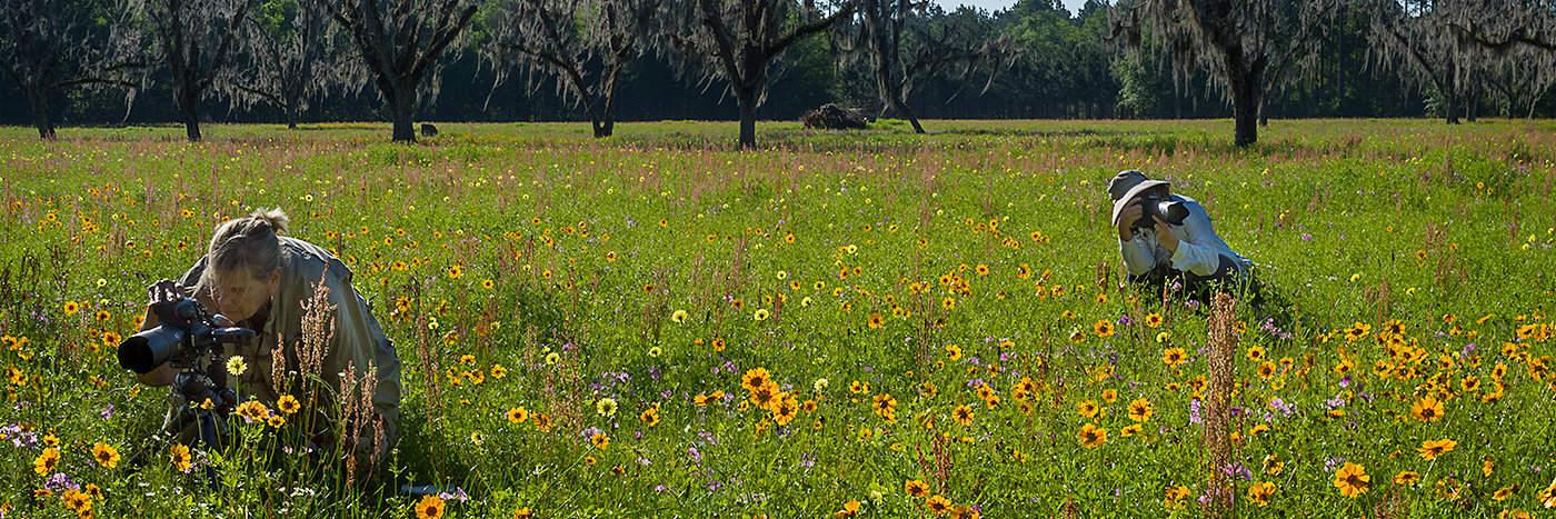 Hampton Wildflower Field Shooters