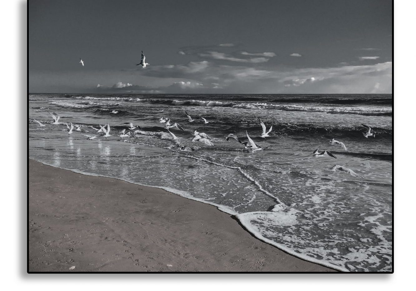 seagulls with drop shadow